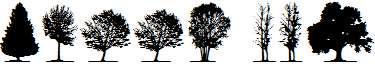 trees-TFB